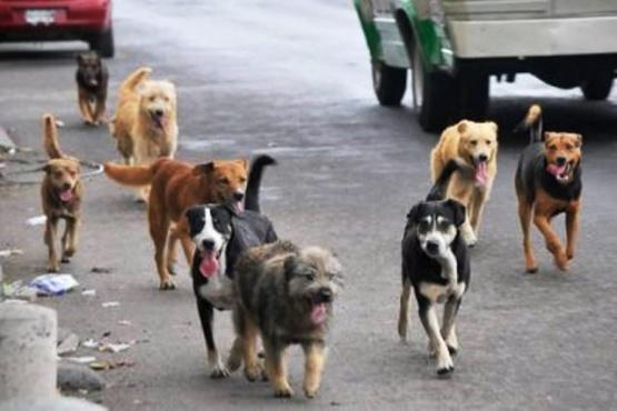 Captura de perros sueltos