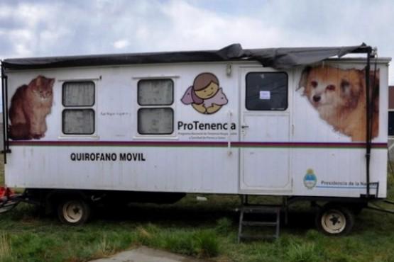 Castraciones masivas de mascotas y el compromiso de los vecinos