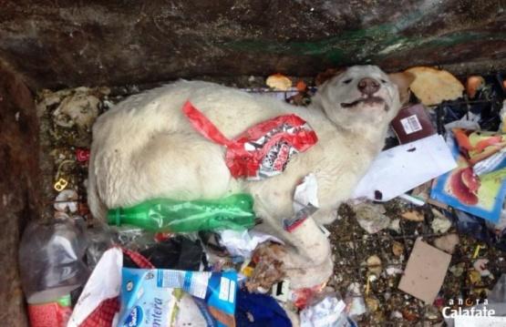 Nuevo caso de envenenamiento de perros