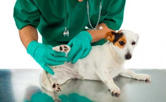 Plan de control canino en Rio Turbio