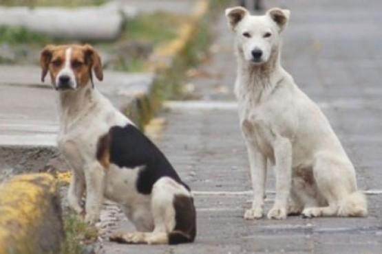 Aprobaron la ordenanza para controlar la proliferación de perros