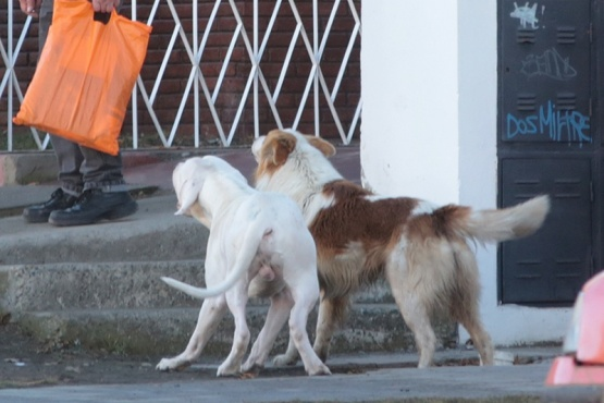 Perros atacaron de manera salvaje a una mujer