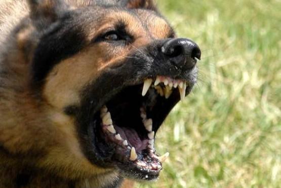 Un perro atacó a una niña y la mordió en la cabeza