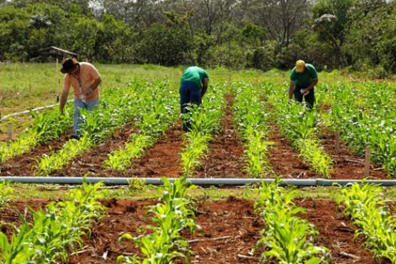El ajuste en la SAF generará que las familias tengan menos cooperación técnica y económica, afirmaron.
