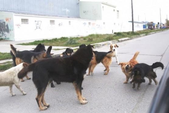 """El 45% de los encuestados optó por el regreso de la """"perrera"""""""