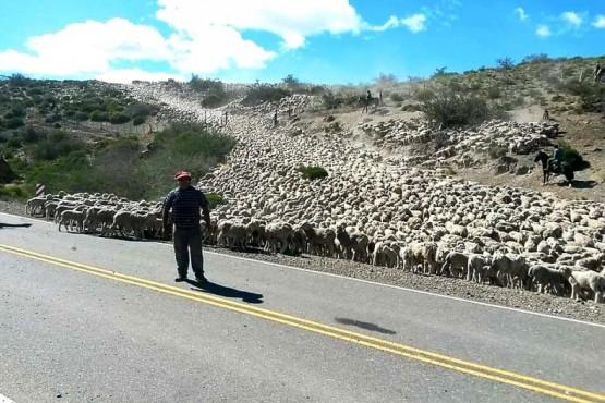 """""""El 60% o 70% de los productores santacruceños cuentan con la producción de la lana y por eso impactará"""""""