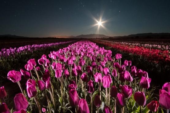 La floristería del mundo