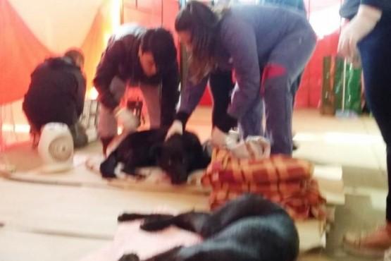 """Superpoblación canina: se tocó fondo y """"este es el camino de la solución"""