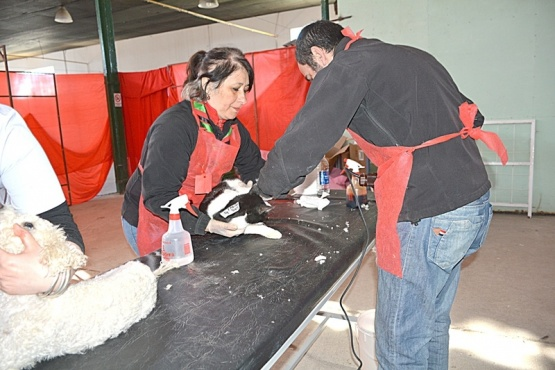 El Operativo Lola prevé la castración de 300 animales durante todo el fin de semana. (C. R)
