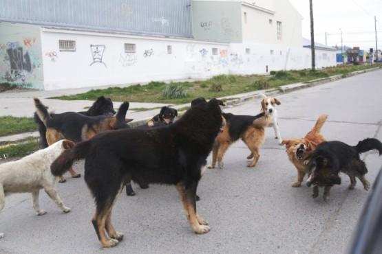 Basualto confirmó que recogerán perros en la vía pública para esterilizarlos