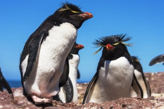 Puerto Deseado inició su temporada turística