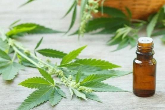 El Garrahan comenzó a realizar ensayos médicos con aceite de cannabis