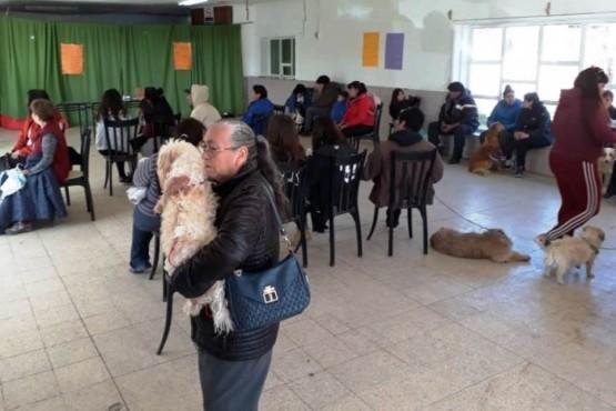 200 mascotas atendidas en la campaña masiva de castración