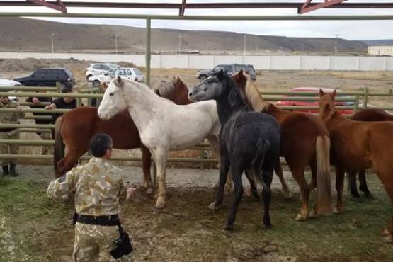 Denunciaron a un suboficial de Operaciones Rurales por exigir coimas
