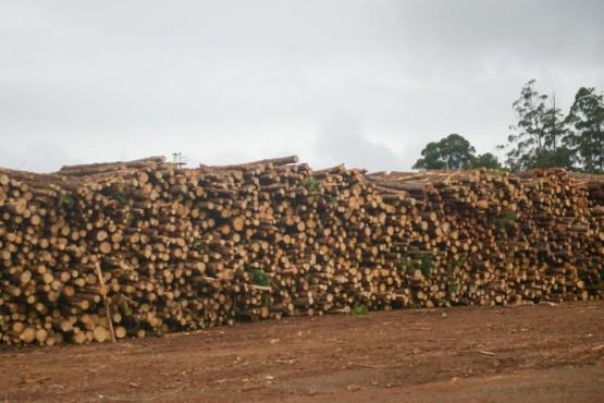 Lanzan un nuevo visualizador de extracciones forestales
