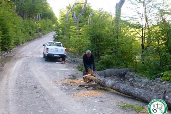 Despeje de árbol caído en la ruta