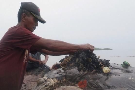 Hallan una ballena muerta: tenía 115 vasos, 25 bolsas y mil fragmentos de plástico en el estómago