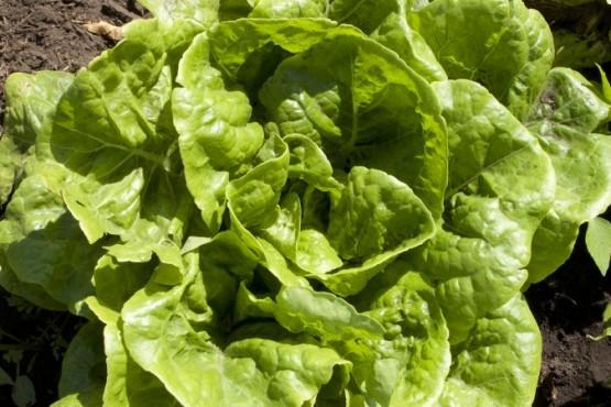 El Senasa capacita al sector hortícola sobre buenas prácticas agrícolas