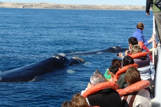 Península Valdés recibió cerca de 6.500 visitantes
