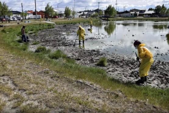 Hubo limpieza en la Laguna de los Patos