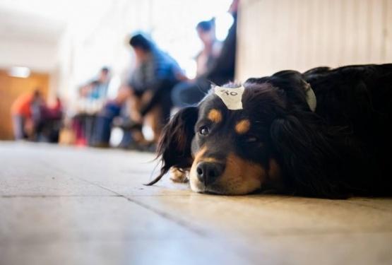 En la localidad de Río Turbio también buscan controlar la población canina.