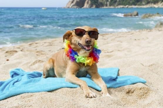 El Concejo Deliberante autorizó la creación de un Balneario Canino