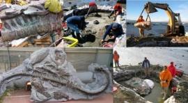 Anunciarán el descubrimiento del Plesiosauro hallado en El Calafate en 2009