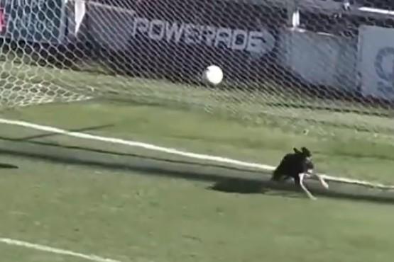 El perro que evitó un gol en el Torneo Federal
