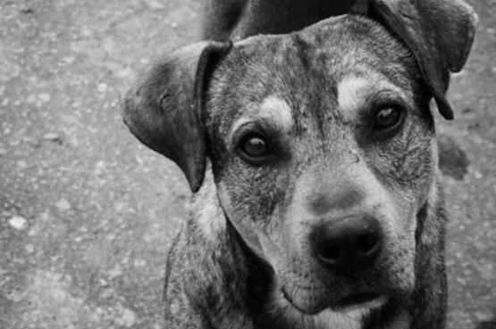 El Calafate activó la perrera y ya piensa el chipeo para aplicar multas