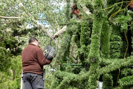 Encendido de árbol navideño
