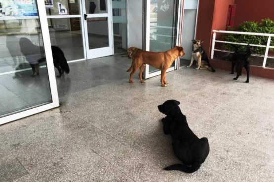 Perros en el Hospital Regional de Río Gallegos