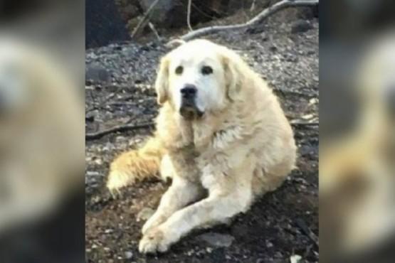 Un perro esperó un mes a sus dueños en su casa en ruinas