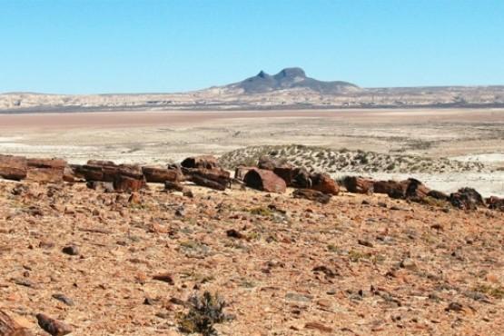 Rechazan recurso por contrabando de piedras de Bosques Petrificados