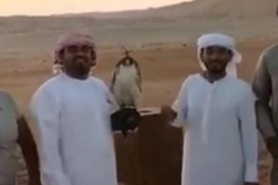 El vídeo que muestra como la