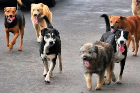 La polémica ordenanza de tenencia responsable de mascotas llegó a Diputados de la Nación