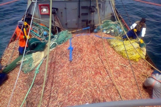Buscan detectar barcos que arrojan residuos de langostino al mar