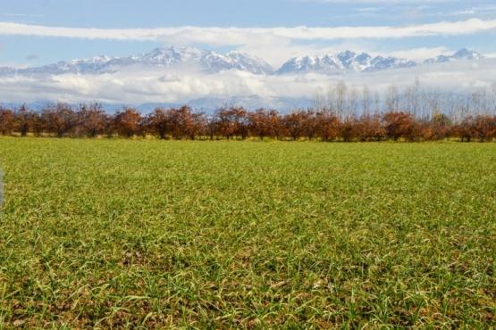 Se declaró la Emergencia Agropecuaria Nacional en La Rioja, Mendoza y Salta