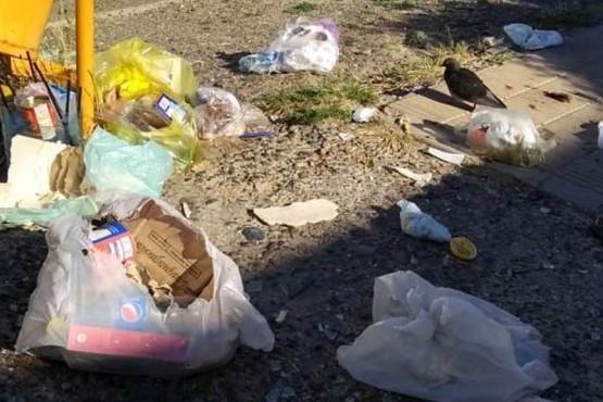 Aparecieron ratas en Km.3 por la basura desparramada en la calle