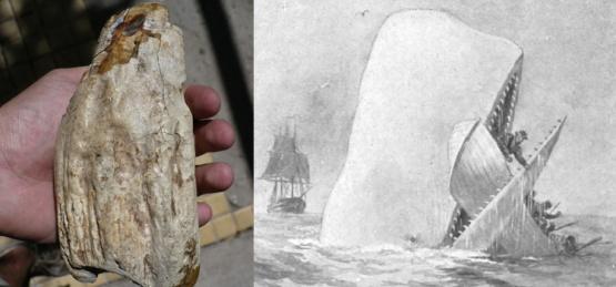 Descubren una bestia marina gigante similar a Moby-Dick