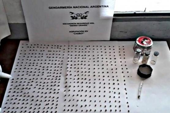 Gendarmería secuestró más de 500 semillas de marihuana que venían a Río Gallegos