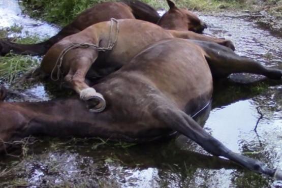 Una descarga eléctrica de una conexión ilegal mató 3 caballos