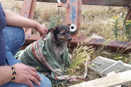 Una perra fue quien sufrió quemaduras