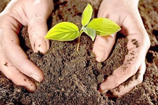 Dan a conocer nueva resolución para la producción de compost