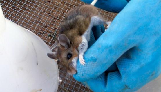 Chubut: pacientes y contactos aislados por el hantavirus