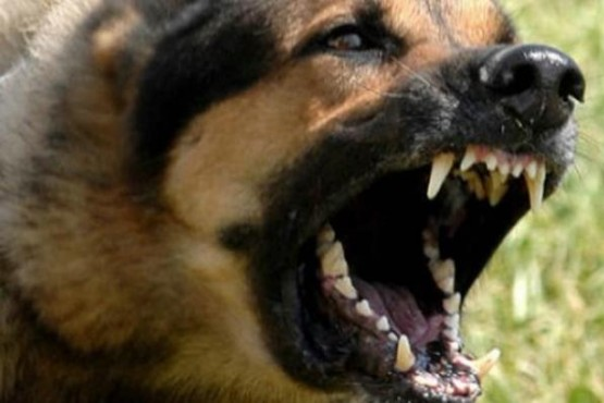 Niño sufrió lesiones al ser atacado por dos perros
