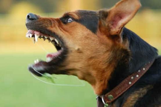 Hospital recibe uno o dos pacientes por mordedura de perros por día