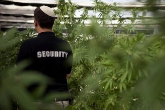 Israel exportará cannabis medicinal y prevé recaudar u$s 260 millones