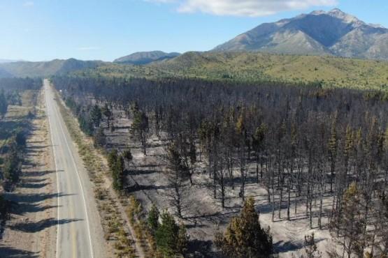 550 hectáreas afectadas por el fuego y el viento complica las tareas