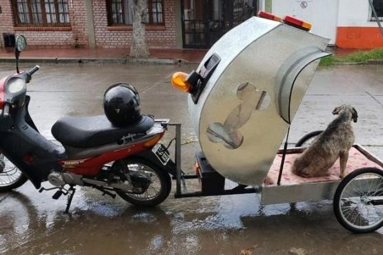 La moto ambulancia para mascotas trasladó a su primer paciente