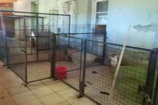 Imputan a vecinos del B° San Benito por maltrato animal